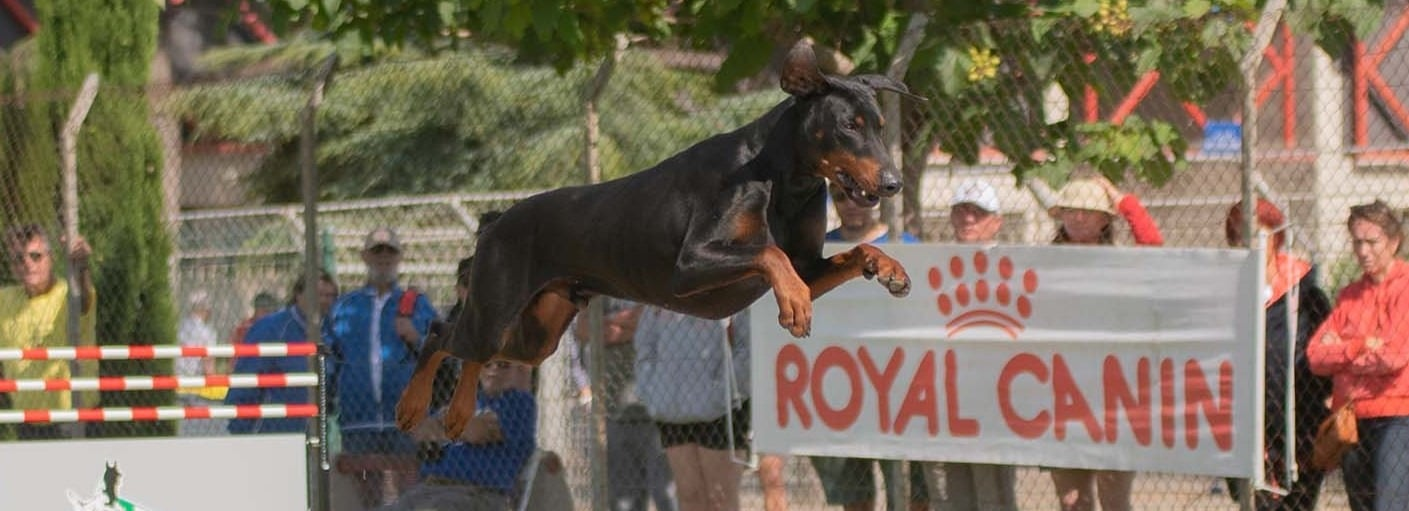 Bolcanstern Dobermann