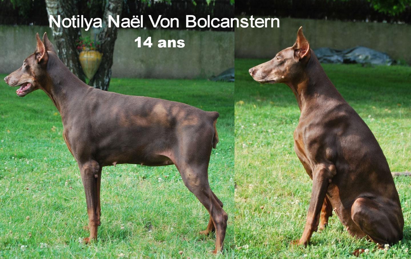 Notilya1