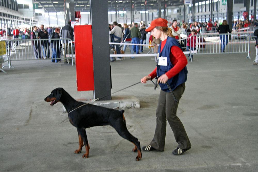 expo-canine-BX-2007029_A