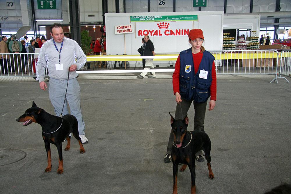expo-canine-BX-2007060_A