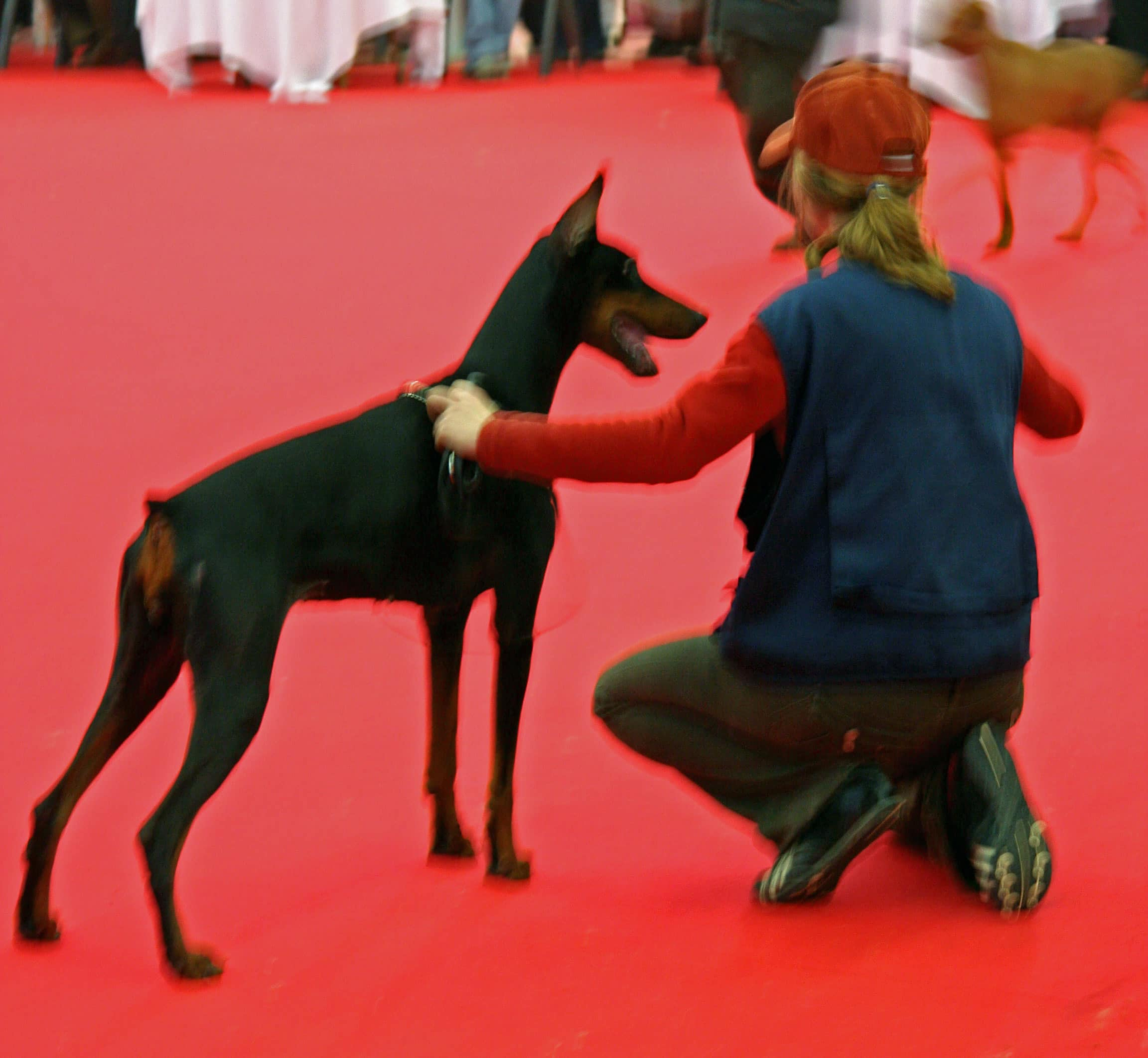 expo-canine-BX-2007097_A