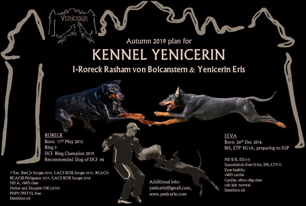 Portée à l'élevage Yenicerin