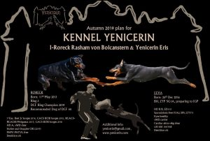 Read more about the article Yenicerin breeding