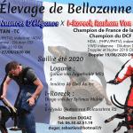 Dobermann de Bellozanne