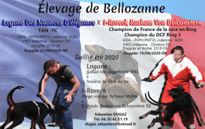 Bellozanne breeding