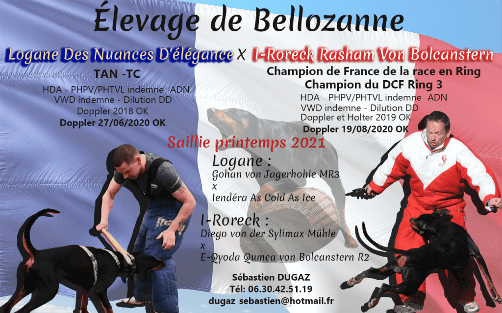 Saillie Dobermann printemps 2021
