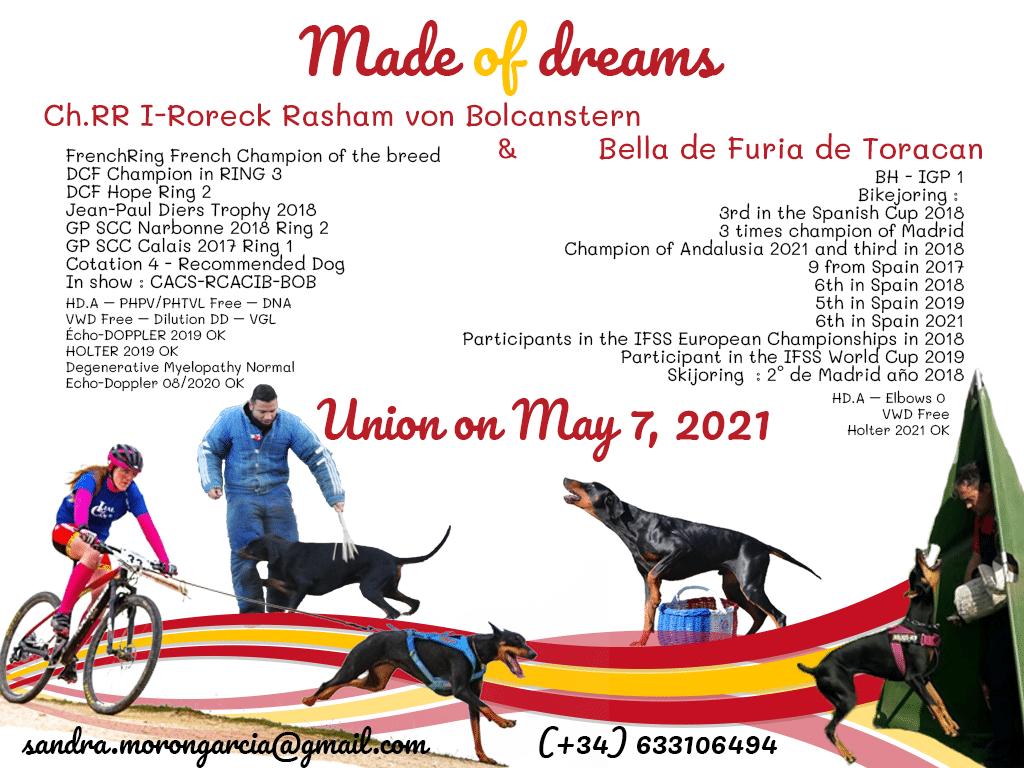 Dobermann Made of Dreams SPAIN